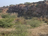1.5 acres cleared of 200 trees in Aravalis