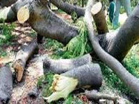 Greens to hug trees to protest BBMP's tree-chopping plan