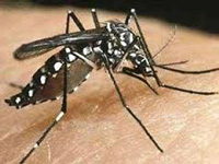 Sangrur district witnesses record 403 dengue cases