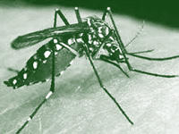 41 more test positive for dengue fever