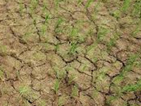 Drought causing distress migration from Telangana