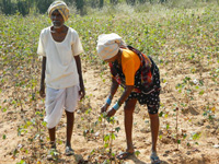 Telangana 'fails' 9 lakh farmers as it is yet to pay its share