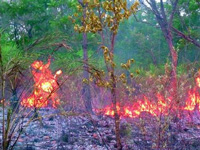 Forest fire claims estimated 10k acres of forest land