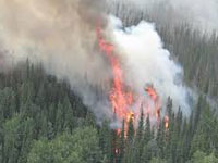 Forest fires doused in Uttarakhand, official says