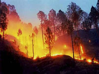 Forest fire mock drills conducted in all districts