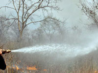 Wildfire in Banavara reserve forest