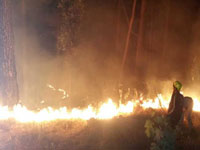 Forest fire a burning issue for Karnataka government: Forest department officials