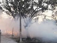 Thousands of trees destroyed in Mathura violence