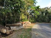 200 trees felled in Mangar buffer zone