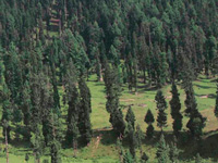 National forest policy will hit Himachal hard
