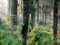 Environment Committee seeks stringent steps to protect forest cover, natural resources
