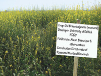 GM field trials in agri university farms?