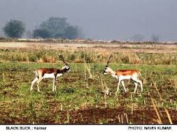 Draft Notification of the Kaimur Wildlife Sanctuary, Shahabad district, Bihar