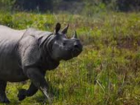 NGT orders surprise inspection of road abutting Kaziranga park
