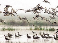 Survey finds decline in number of birds in kole wetlands