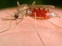 3434 students test positive for malaria