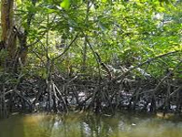 More mangroves burnt, destroyed for farming; Greens urge state to protect all mangroves