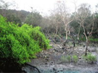 Goa's mangroves most vulnerable'Lisa Monteiro