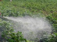 Punjab govt issues notification banning 20 insecticides