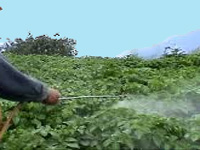 Organic farmers claim natural pesticide saved paddy from pests