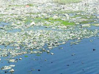 Hyderabad: Pollutants in Musi rise, river becomes sewage