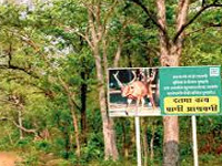 Teens to promote forest conservation