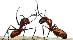 Can ants save Earth from global warming?