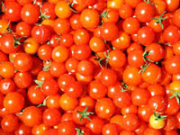 Tomato prices soar as climate change hits crop