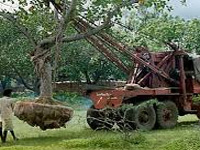 Chhattisgarh to use transplanter machine to relocate trees
