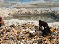 Prepare action plan on solid waste mgmt for Kumbh