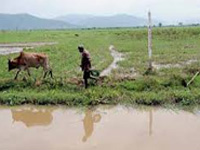 Draft national policy on wetlands opposed
