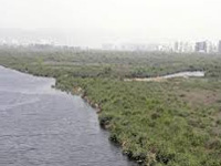 Navi Mumbai wetlands may soon turn into dustbowls