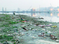 NGT bars vegetable farming on Yamuna floodplains fearing possibilities of causing cancer