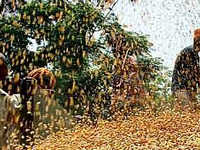 Government rolls out crop insurance scheme