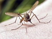 Chikungunya cases on rise after showers