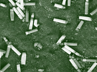 Centre gets three more weeks to declare cigarette butts 'toxic waste'