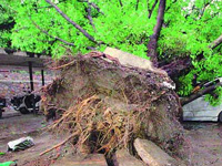 Submit report on tree deconcretisation every 6 months: NGT