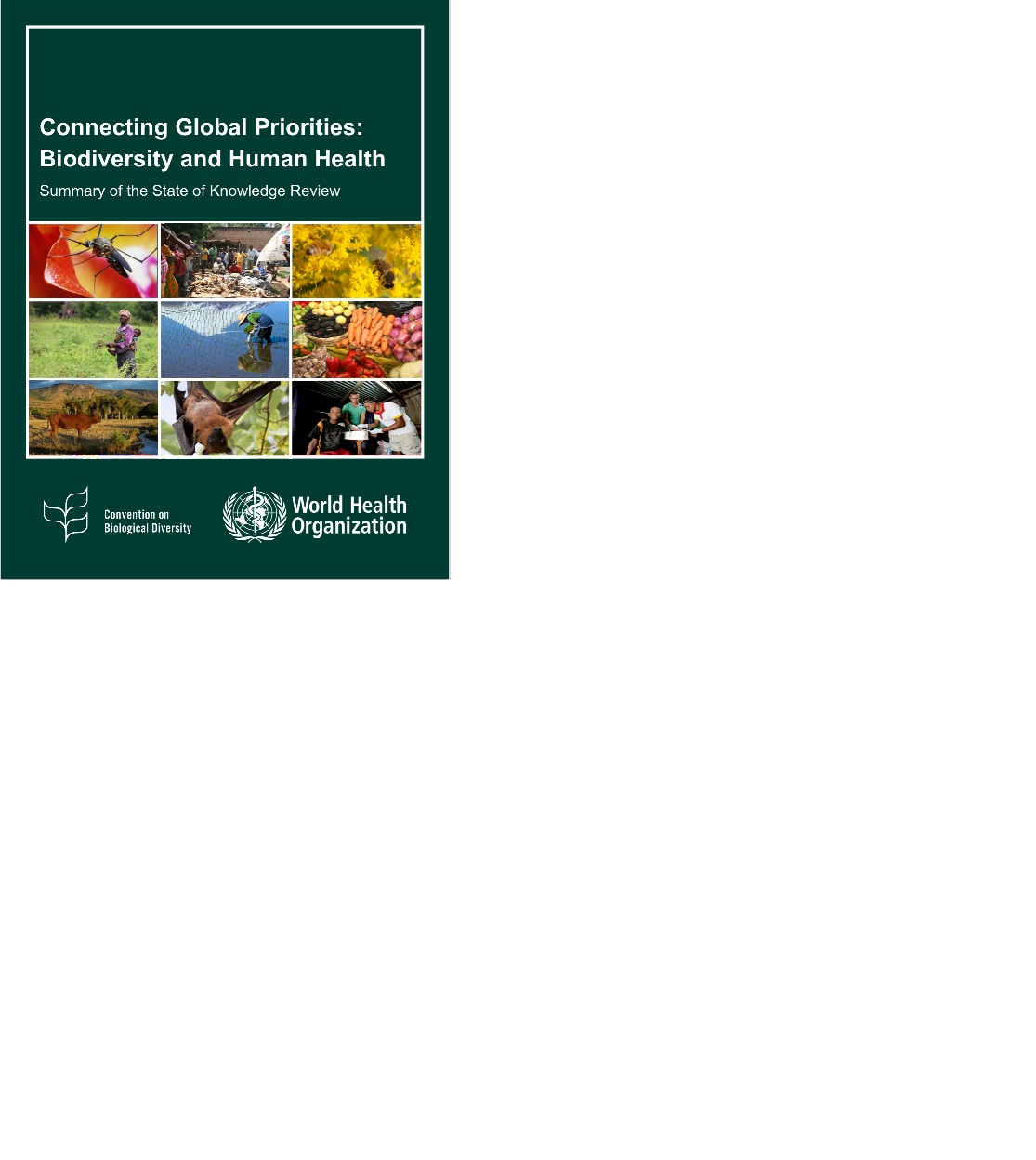 Connecting global priorities: biodiversity and human health - summary of the state of knowledge review