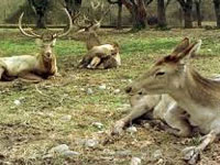 30 deer die in Jodhpur in 3 days