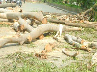 NGOs raise concern over felling of trees
