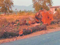 Revoke tree cutting nod for 3 projects: Government to LG