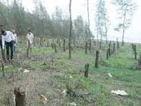 31,000 trees to be cut to widen Mumbai-Goa highway