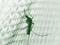 Dengue claims 1 more on fringes