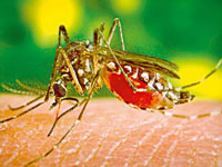 Health dept alert on chikungunya, dengue outbreak