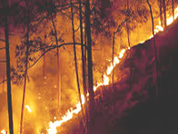Policy on checking forest fires