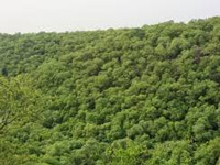 765 hectares of Kappatagudda forest encroached upon, admits government