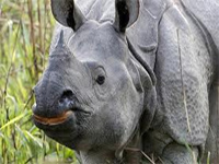 Assam CM toughens measures to check rhino poaching