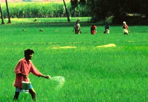 India`s fertiliser subsidy policy favours the industry