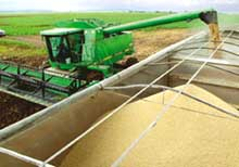 EC stops import of US long grain rice