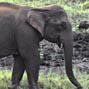 Effect of habitat fragmentation on Asian elephant ecology and behaviour patterns in a conflict-prone plantation